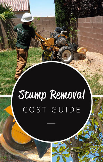 stump-removal-cost-guide-350-x-550