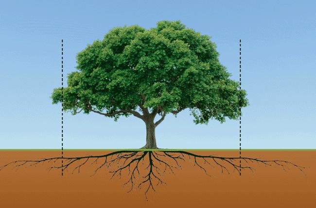 tree-drip-line
