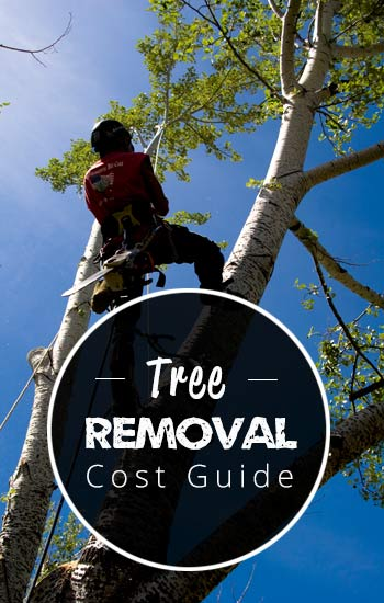 tree-removal-cost-guide-USA