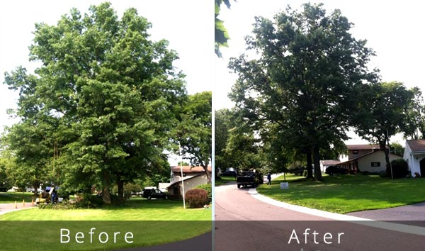 tree trim weight reduction before and after
