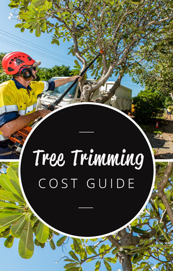 tree-trimming-cost-guide-350-x-550