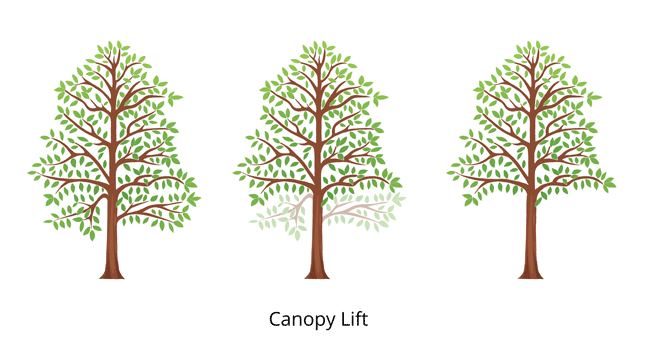 canopy-lift-tree-trim-650x350