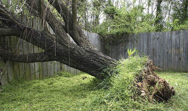 fallen-tree-in-backyard-on-fence