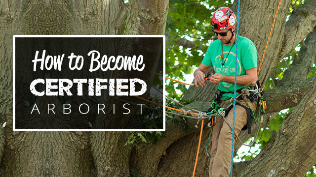 how-to-become-a-certified-arborist