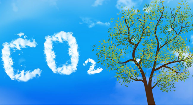 how-trees-clean-co2-from-the-air