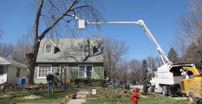 large-dead-tree-removal-in-progress