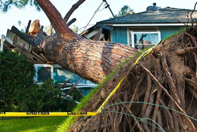 tree falls over property line