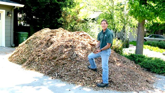 tree-mulch-pile-in-drivways