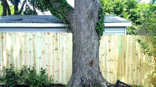 tree-on-property-fence-line
