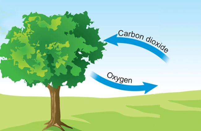 trees clean the air