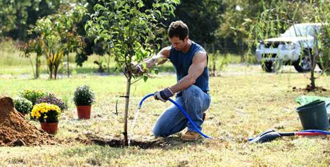 waterig a tree in maintenance program2