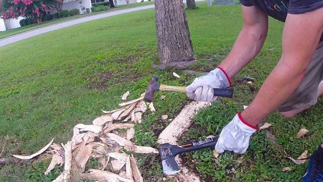 removing-surface-roots-with-an-axe