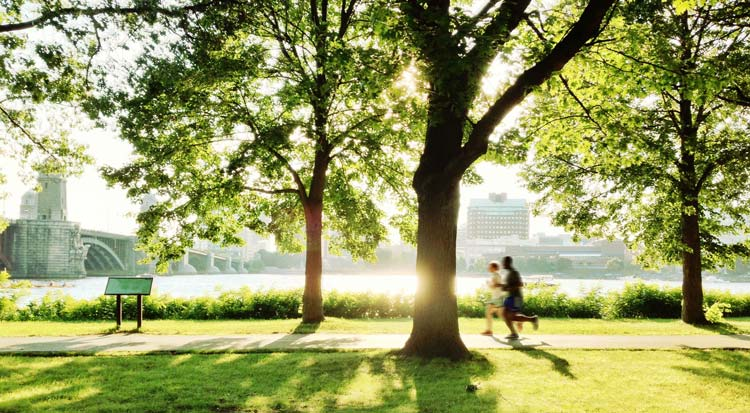 benefits of trees in suburbia