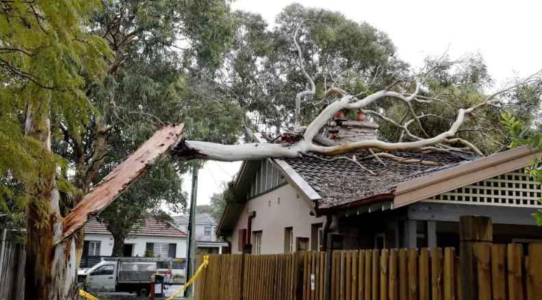 tree branch over roof after storm