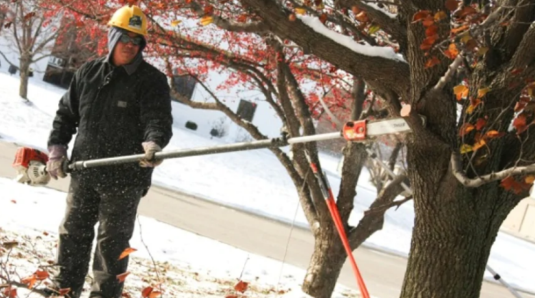 tree trimming in winter