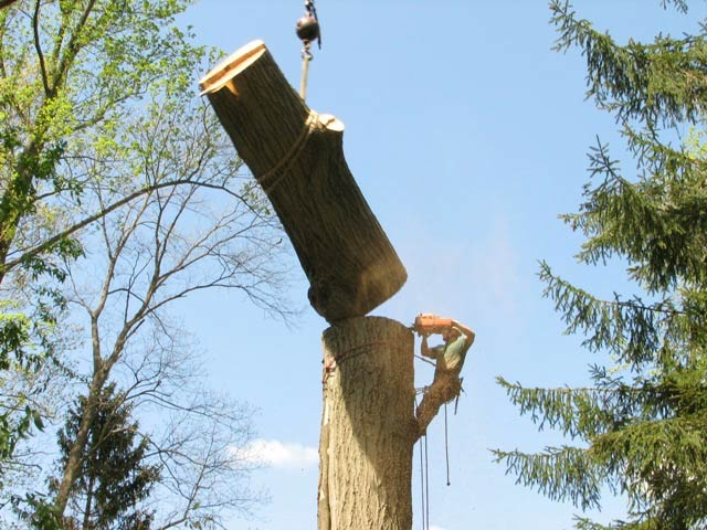 getting-a-tree-removed-for-free