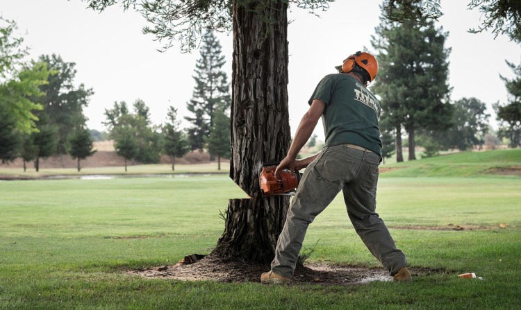 pine-tree-removal-on-golf-course