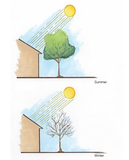 sun penetration of tree in summer and winter
