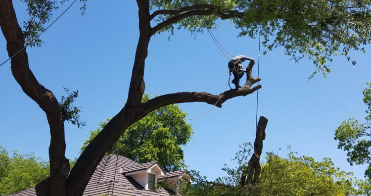 tree-being-cut-down-at-minimal-cost