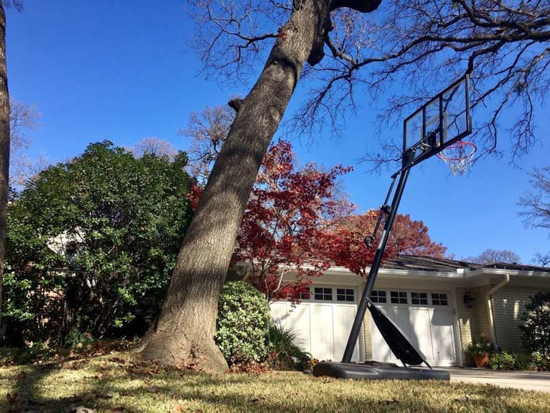 Leaning tree over driveway and house