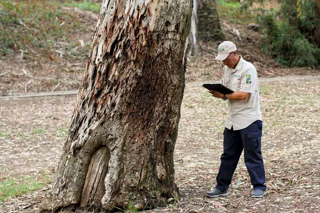 arbrosit in making notes on tree
