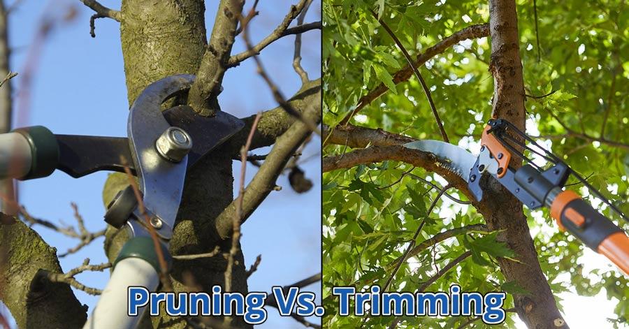 pruning-vs-trimming