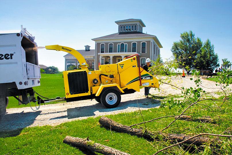 tree service near you