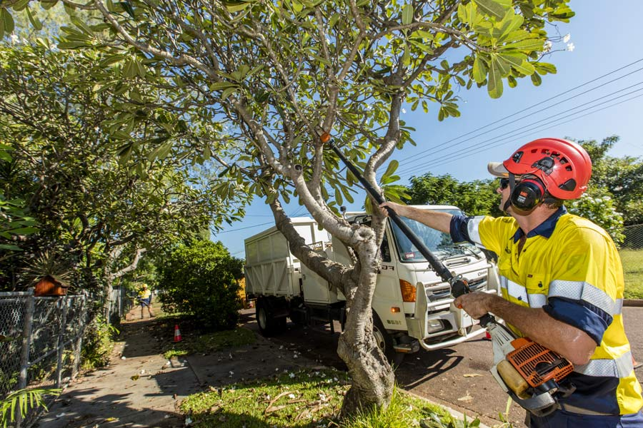 trimming-of-stree-tree-by-qualified-arborist