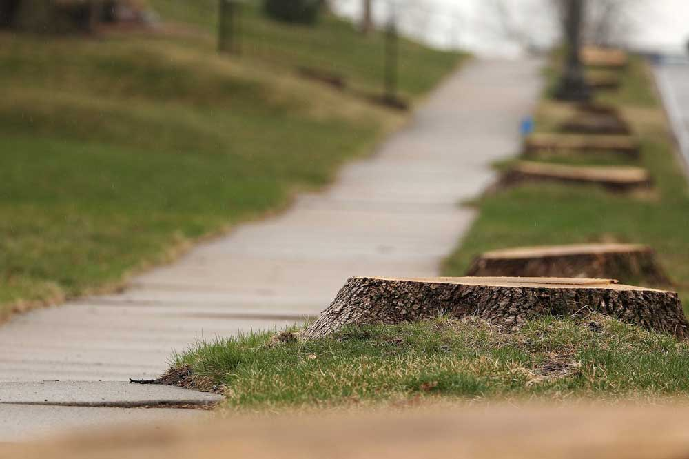city-removes-trees-on-nature-strip