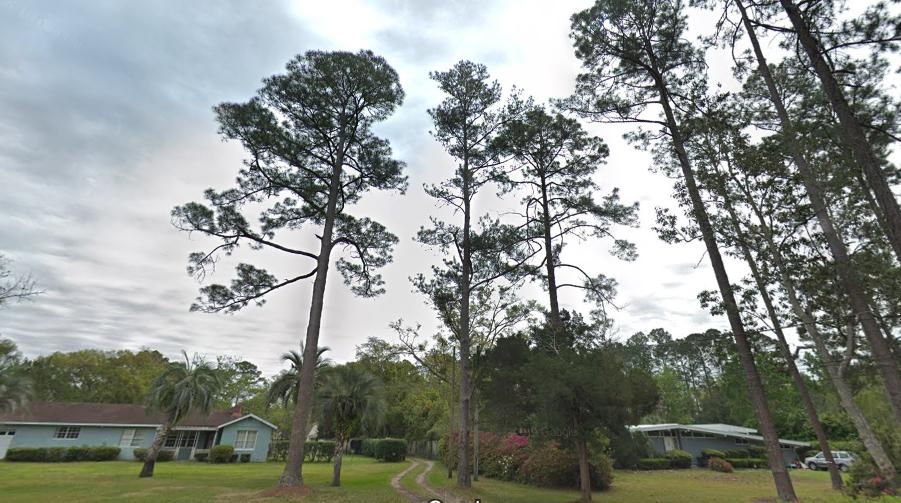 Jacksonville tree trimming permit