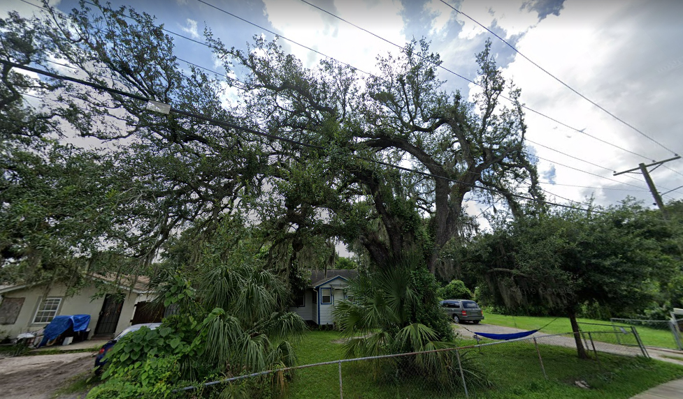 cost tree removal tampa