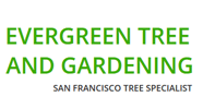 evergreentreesanfrancisco