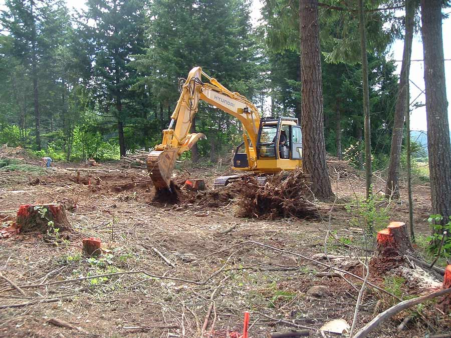 land clearing of trees by acre