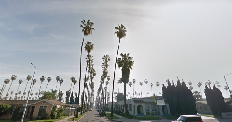 palm trees trimmed in Los Angeles