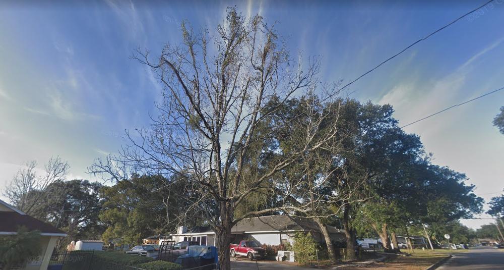 permit trim tree tampa