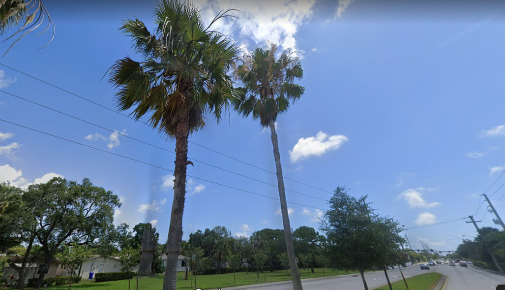 remove trees in Fort Lauderdale
