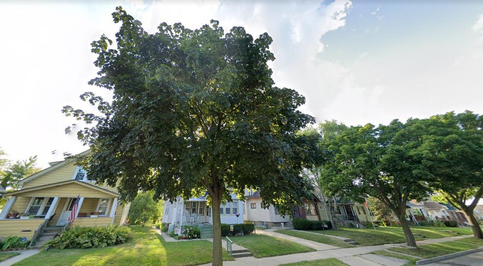 Public trees in Milwaukee