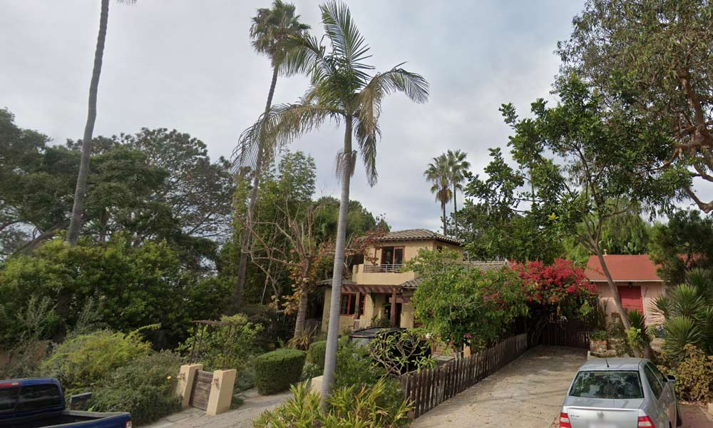 palm trees trimmed del mar San Deigo CA