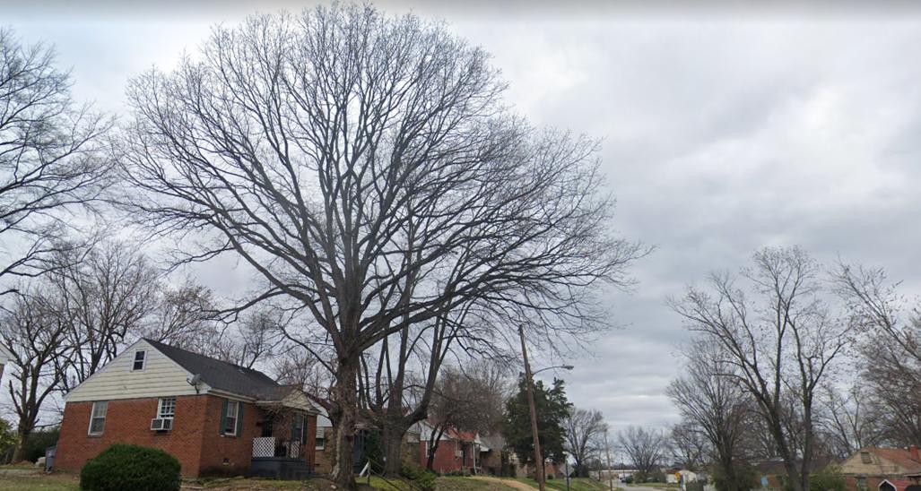 remove a tree in Memphis