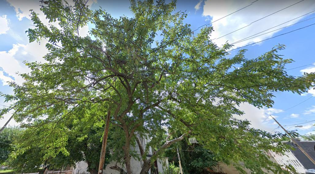 trees in the city of Philadelphia