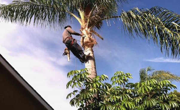 Tree Surgeon Near Me