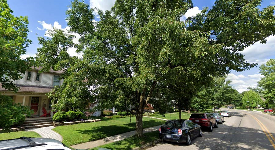 remove a tree on my property in Columbus