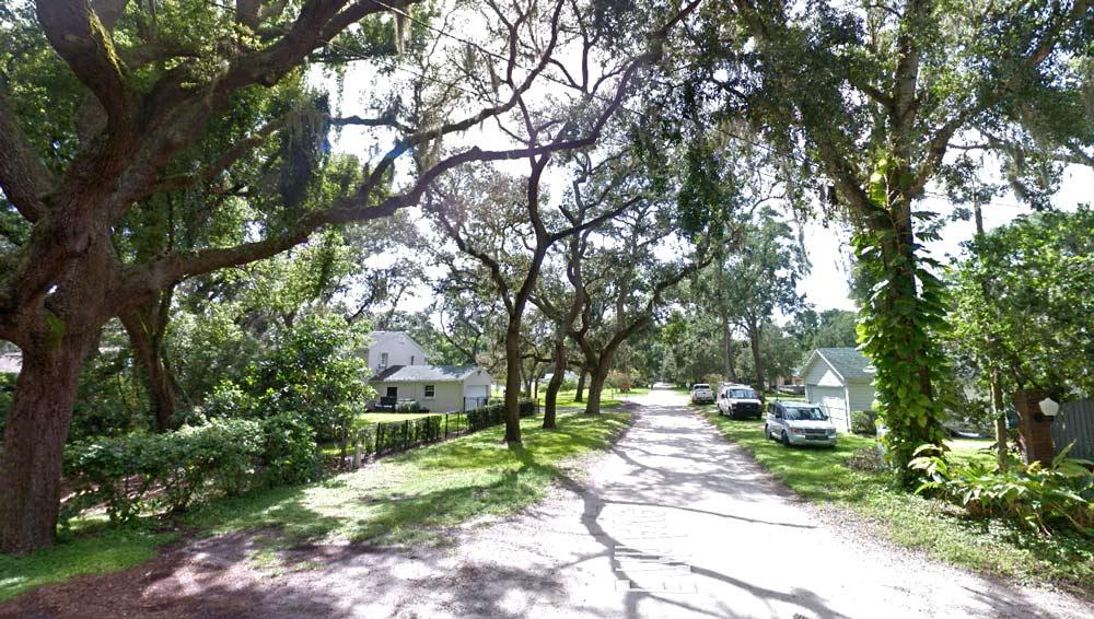 street-tree-timmming-orlando-fl