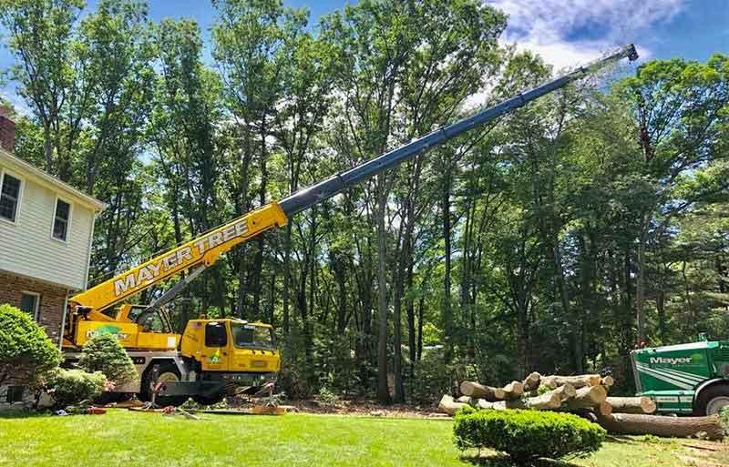 tree removal in Boston