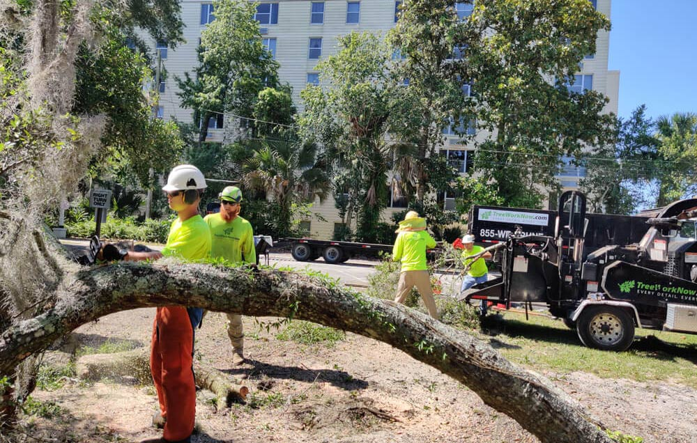tree service removing large tree in Orlando park