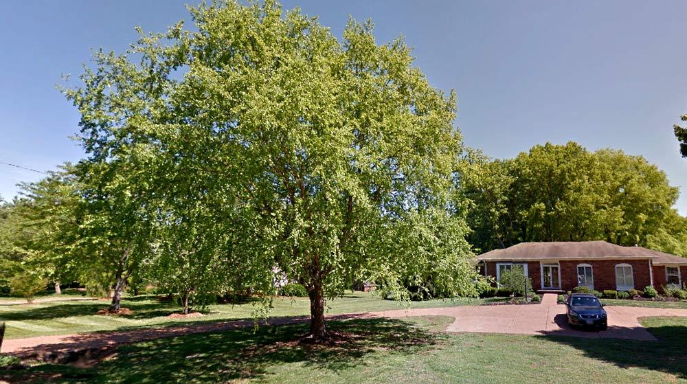 Tree trimmed in Brenthaven TN