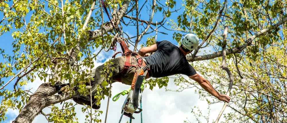 Tree Trimming in Nashville TN