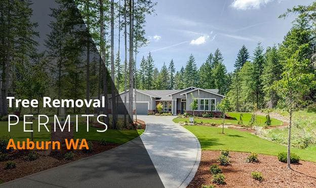 tree removal permits Auburn WA