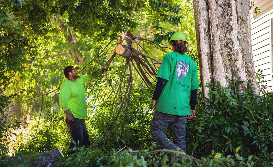 Tree trimming service Bakersfield CA