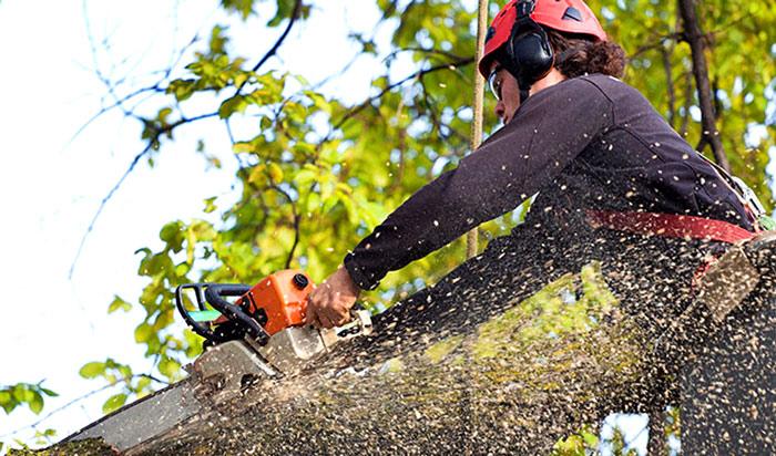 Tree removal permit Arvada 2
